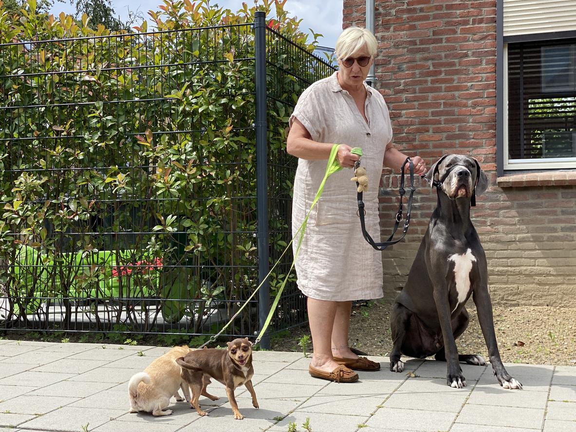 En liten eller stor hund?