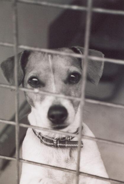 Hund i bur eller rastgård