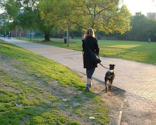 Klädd för aktiviteter med hunden